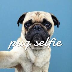 Pet Selfie Photo Enhancements